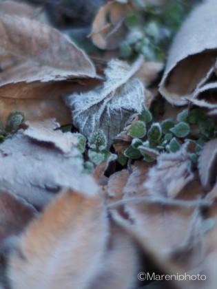 霜のついた葉