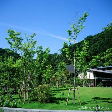 緑地と青空