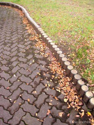遊歩道にたまる落ち葉