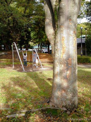 木の幹の向こうで鉄棒に興じる親子