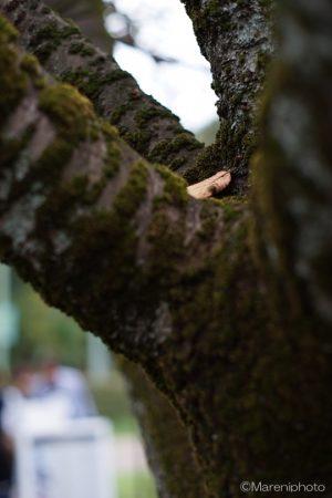 木の幹の間の落ち葉