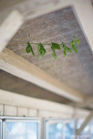 ホームの屋根の下に伸び出した草