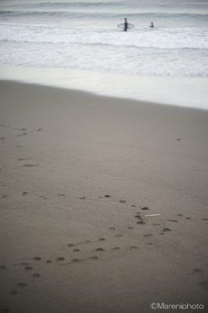 砂浜に犬の足跡