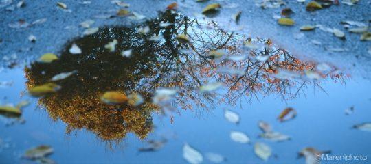水溜りに映る木々