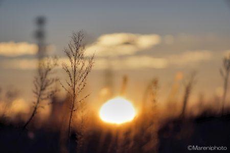 枯れ草と日の出