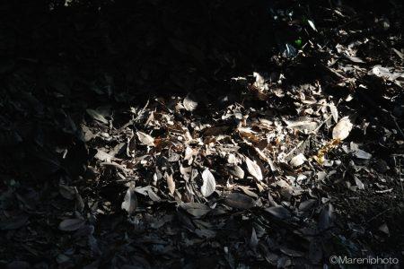 枯葉に当たる日の光