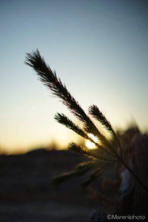 松に日の出