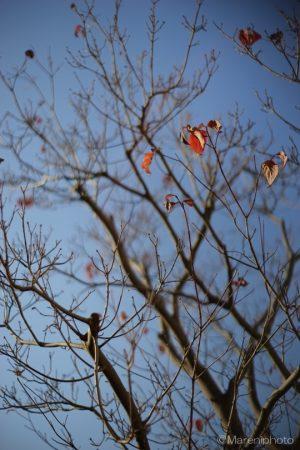 枯れ木に枯葉
