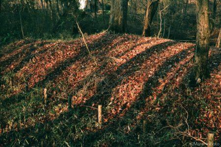 落ち葉に伸びる影