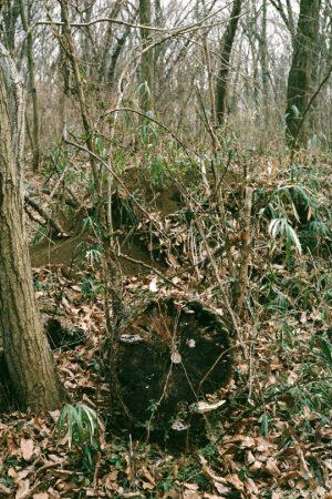 間伐された木