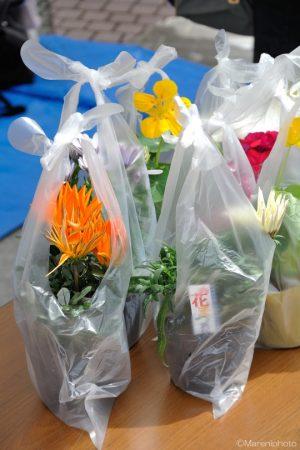 鉢植え用の花