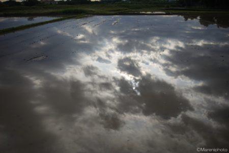田んぼの水に映った曇り空