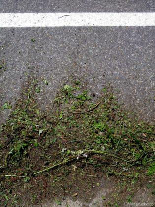 道路上の刈られた草