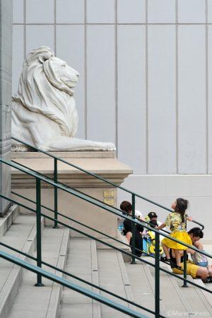 ライオンを見つめて