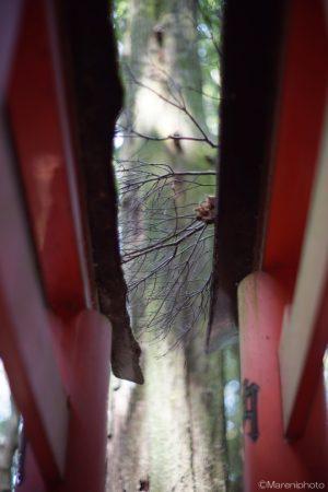 鳥居の上の小枝