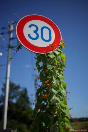 つたの絡まる道路標識