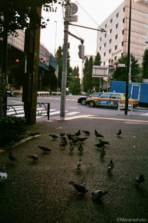 交差点と鳩