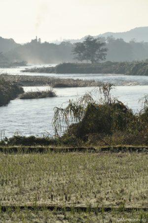 田んぼと川