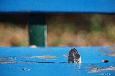 ベンチと枯れ葉