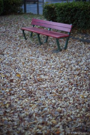 枯れ草の絨毯