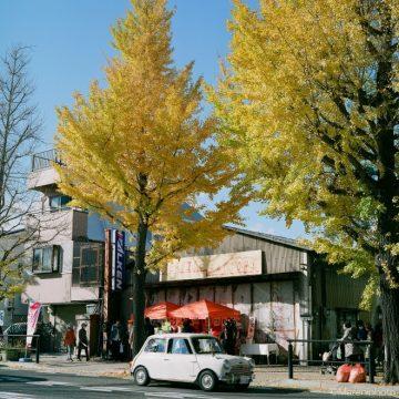 黄葉の銀杏並木