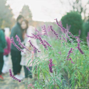 紫の花と寄り添う二人