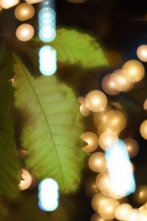 葉とイルミネーション
