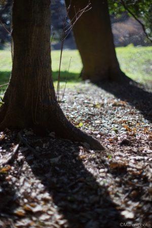 樹と落ち葉と影