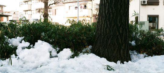 雪とイチョウの根元