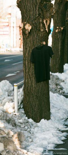 イチョウの幹に吊るされたTシャツ