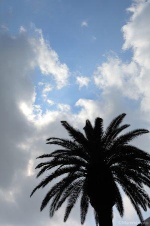 ヤシの木と青空