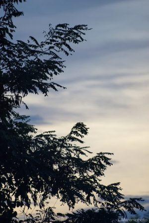 夕方の空と木の葉