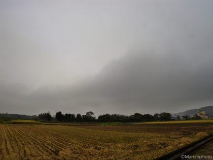 収穫後の田んぼと曇り空