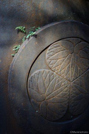 葵の紋と草