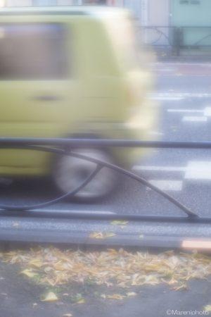 歩道の落ち葉