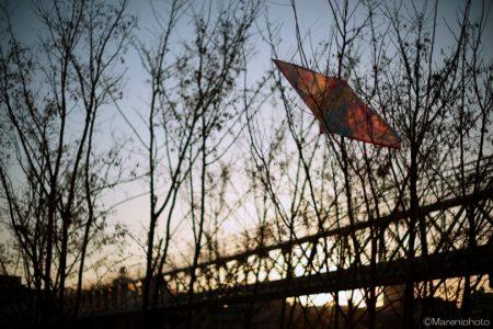 枯れ木の凧