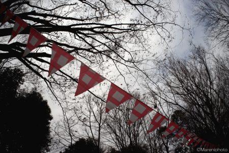 公園の樹木と旗