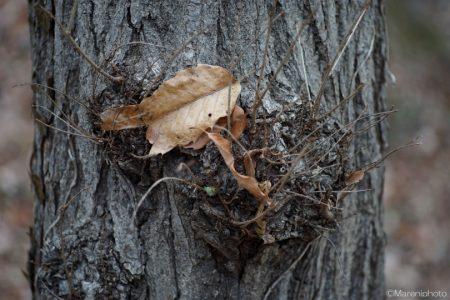 枯れ葉と枯れ枝