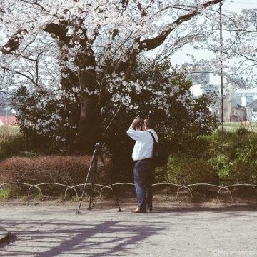 桜の花を撮る人