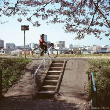 桜の木のそばを自転車で通る人