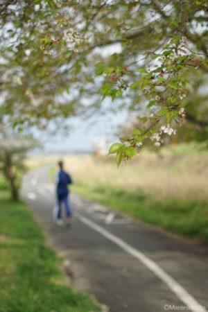 桜の樹とジョギングする人