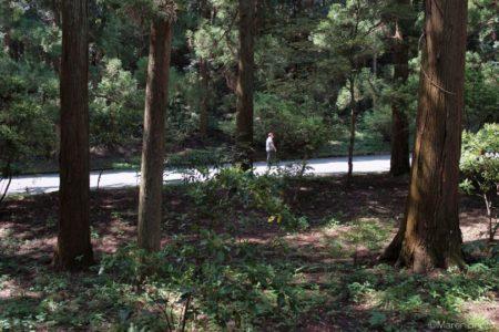 多摩御陵の参道を歩く人