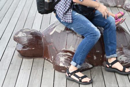 ウミガメの腰掛け