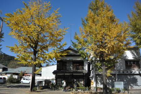 銀杏の木と古い家