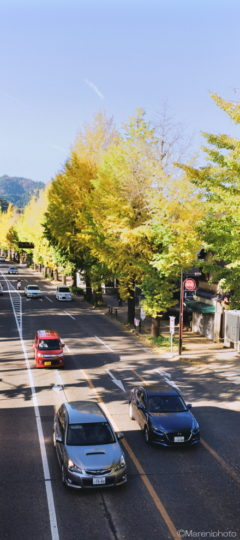 街道とイチョウ並木
