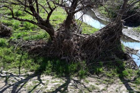 枯れ木と影