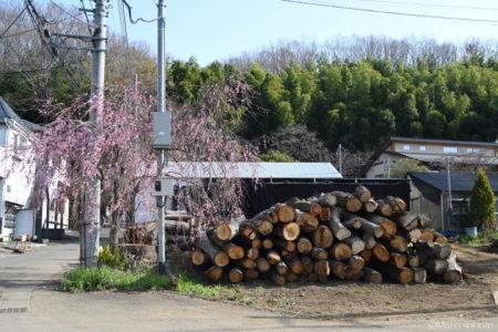 枝垂桜と材木