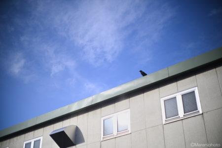 工場の屋根の烏