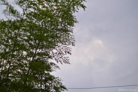 竹と曇り空