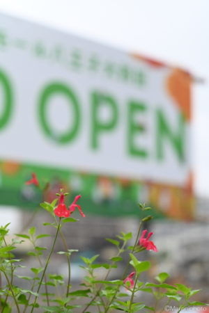 オープンの看板と花